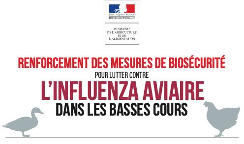 influenza-aviaire2